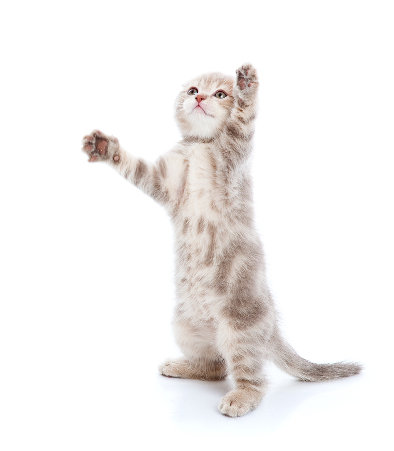 5 Lessons Cats Teach Us about Creating Blissfully Mindless Content