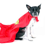The Underdog's Guide to Building an Unforgettable Blog